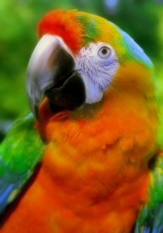 The Real Macaw - Colorful - by nheilweil
