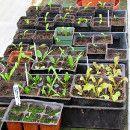 5 Consejos Para El Trasplante En El Huerto O Jardín ecoagricultor.com