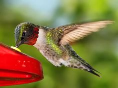 Attract life to your with a sustainable Create a Habitat for song birds, butterflies, and other native wildlife! Small Birds, Love Birds, Beautiful Horses, Beautiful Birds, Beautiful Things, Nicolas Vanier, Beautiful Landscape Wallpaper, Horse Wallpaper, Ruby Throated Hummingbird