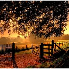 Sunrise  Via Living the country life.