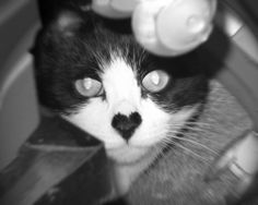 ♡ heart nose!    Just like my sweet Lulu had!