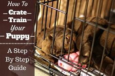 Pupy Training Treats - The most thorough, step-by-step guide on how to crate train a puppy you can find. Highly detailed, Including what to do at night and if you work full time. - How to train a puppy? Puppy Training Tips, Training Your Dog, Potty Training, Training Schedule, Crate Training Puppies, Toilet Training, Training Plan, Puppy Crate, Pocket Beagle