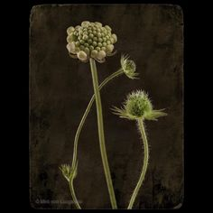 """Miró von Laugaricio na Instagrame: """". . . . . #artistic #art #creative #gallery #flowerphotography #arty #graphic #gallery #artcollection #impression #top_macro #photoart…"""" Living Room Designs, Photo Art, Dandelion, Gallery, Creative, Artist, Flowers, Plants, Pictures"""