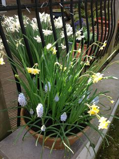 Garden Inspiration, Gardens, Plants, Outdoor Gardens, Plant, Garden, House Gardens, Planets