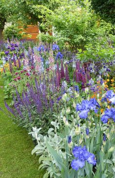 Fantastic planting in the Healthy Cities garden - mix of purple, blue, pink and orange with silver-green foliage #CottageGarden