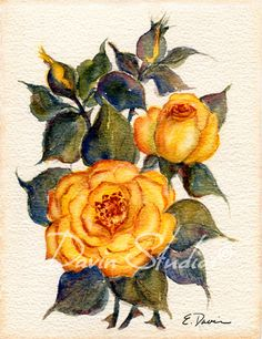 Yellow Roses  Floral Bouquet of yellow roses art by davinstudios