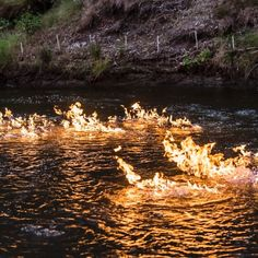 Part of a Queensland river bubbling with methane gas explodes into fire after being set alight by a Greens MP.