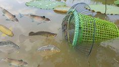 Amazing fishing Video tip