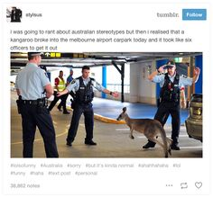 At least it wasn't a male red kangaroo or those officers would probably be in hospital Australian Memes, Aussie Memes, Australian Animals, Really Funny, Funny Cute, The Funny, Hilarious, Dc Memes, Funny Memes