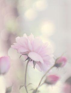 Softly ✿ڿڰۣ