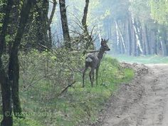Deer... by Anastasia · 365 Project