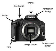 Digital SLR Cameras images   Digital SLR basics - Digital Cameras: SLR & Compact Cameras