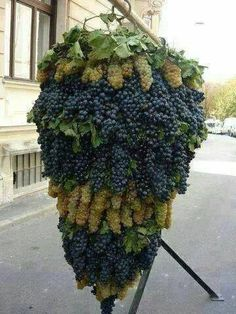 A huge, lush display of grapes grown in Israel - a land that has been developed from desert and is now a key producer of fruits and much more.