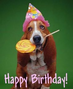 Funny happy birthday quotes comment 36 new Ideas Funny Happy Birthday Wishes, Funny Happy Birthday Pictures, Happy Birthday Greetings, Birthday Cartoon, Dog Birthday, Funny Birthday, 15th Birthday, Happy Anniversary, Pictures Images