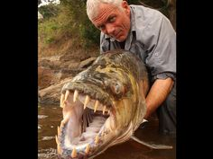 Goliath TigerFish.  Although not an ocean fish, thought worthy of a pin.  Lurks the waters of the Congo River system and lakes in Southern Africa.
