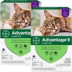 Other Cat Supplies Pet Supplies Flea Control For Cats And Kittens Over 9 Lbs 2 Month Supply Suitable For Men And Women Of All Ages In All Seasons