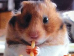 Cutest Picture Ever: Hamster Eating Spaghetti - Fork in the Road