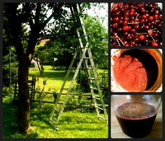 making of_cherry wine