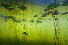Onderwaterfotografie   Willem Kolvoort