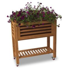 Algreen 32002 Ergogarden All Season Raised Garden Bed Terra Cotta by Algreen. $149.99. Self watering planter with wicking strips and water collection tray. Durable weather resistant fir wood frame. Counter height of ergogarden provides ergonomic use all year round. Warm contemporary design. Durable swivel and locking wheels allow unit to move from sunroom or kitchen to deck or patio. The Ergogarden Elevated Garden features a warm and contemporary design beautifu...