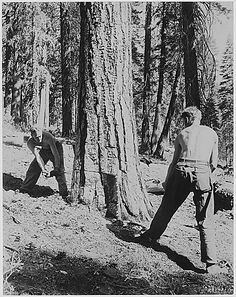 civilian conservation corps pros and cons