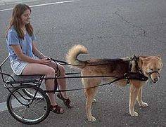 I want to build a dog cart - Page 2