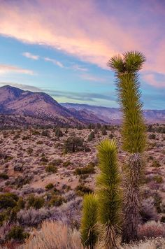 Sunset over Joshua Tree National Park, California: