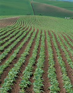 """The 2015 Acres USA conference is only weeks away, so please make sure you have signed up for for our pre-conference workshop """"Advanced Soil & Crop Health — Maximizing Crop Performance Profitably, Even Under Difficult Growing Conditions,"""" if you are interested. Details about the workshop are linked below.  http://www.acresusa.com/events/2015ecoagu-crophealth #tpsl #ag #cornbelt #lab #agriculture #AgTech #Agronomics #BioTech #Corn #Farm #Farming #Farmers #Soybean #Wheat #AcresUSA"""