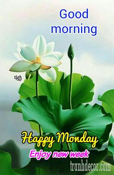 🌅శుభోదయం - Good morning కృష్ణ Happy Monday Enjoy new week - ShareChat Good Morning Monday Images, Happy Monday Morning, Good Morning Friday, Good Morning Picture, Good Morning Wishes, Morning Morning, Monday Wishes, Monday Greetings, Morning Greetings Quotes