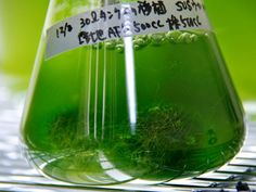 Burning natural gas to process the fuel creates carbon dioxide that researchers say can be mixed with waste water and fed to algae, which can be processed into cattle feed and other products.