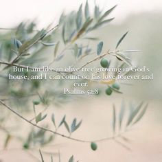 """But I am like an olive tree flourishing in the house of God; I trust in God's unfailing love for ever and ever. Bible Psalms, Scripture Quotes, Faith Quotes, Scriptures, Thru The Bible, Bible In A Year, Prayer Verses, Jesus Pictures"