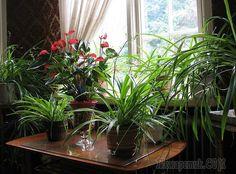 Советы по уход уза комнатными растениями в домашних условиях для начинающих цветоводов