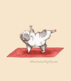 guinea-pig-yoga-halfmoon