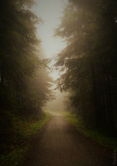 mist,forest-I'm definitely the type of person to take the long way home to listen to more songs&see more. Editing Pictures, Photo Editing, Long Way Home, Heart Of Europe, Bokeh, Homeland, Mists, Country Roads, Earth