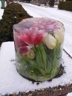 Med Berit Adolfssons tulpanknep kan du fixa fint i trädgården - trots minusgrader. Hennes vackra isskulpturer älskas nu i sociala medier. – Tulpaner är mina älsklingsblommor och…