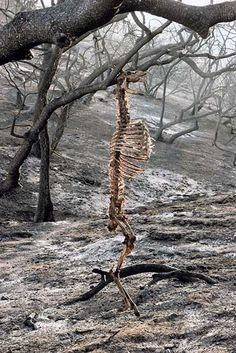Deer stuck in a tree during a forest fire