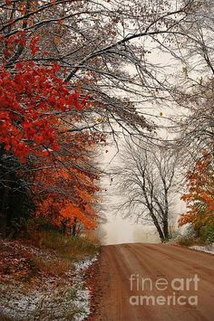 Autumn leaves stand out in a snowy landscape. This image was captured in Cadillac, Michigan, USA.