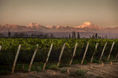 Bodega #Norton (Perdriel, #Mendoza)