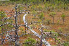 Retkeilyreitti - pitkospuut suo kelo syksy ruska kelot männyt suomaisema kansallispuisto Leivonmäki Berlin, Fall Photos, Tofu, Wilderness, Woods, Scenery, Hiking, Camping, Country