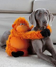 :-D  Looks just like my weim