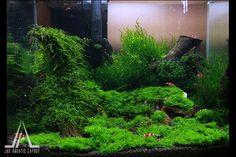 Moss Nano Aquascape | Paludarium & Indoor Jungles | Pinterest