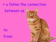 cat valentine card meme * cat valentine card ` cat valentine card funny ` cat valentine card diy ` cat valentine cards for kids ` cat valentine card free printable ` cat valentine card meme Bad Valentines Cards, Valentines Day Memes, My Funny Valentine, Cat Valentine, Valentine Ideas, Pick Up Lines Cheesy, Cute Memes, Wholesome Memes, Funny Cards