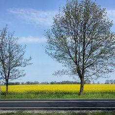 #niebo #polska #polskajestpiekna #travelphotography #amazing #dwwcrew #lifefolk #live_folk #live_nature#rzepak #dw#jj_still_life#naturelovers #photooftheday #world#natural #natura #minimal #minimalism #minimallife #tv_living #tv_stilllife #liveauthenic#tree #naturelovers#travel #travelawesome