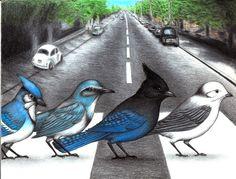 Original Bird Artwork & Prints - Birds On Things by Don McMahon