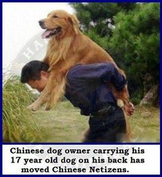"A Chinese man was caught carrying an old pet dog on his back when out for a walk. When a surprised passer-by asked him: ""How can you bear such a big dog on your back? Why not let it walk by itself""? The man turned back and explained in a serious manner: ""He is 17 years old now and is too old to walk anymore. So I carry him pickaback for a walk and he is happy to see the outside world""."
