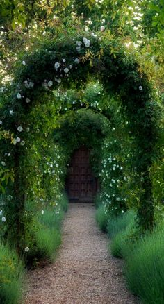 Lush arches on garden path.