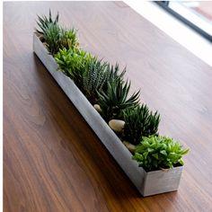 "Gus* Modern Rectangular Fruit Trough Planter  30""W x 3.5""D x 3""H - $97.75 trade - for the counter"
