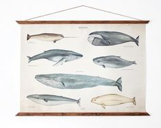great for a boys room  LARGE A1 Whales Canvas poster - vintage illustration educational chart illustration WAP2001  $120