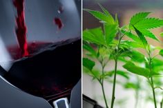 Wines I Love / Marijuana-Laced Wine Grows More Fashionable in California Wine Country