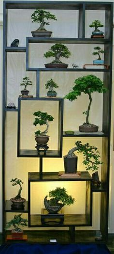 Houseplants for Better Sleep Shohin Mame Making A Big Impact On Multi-Level Bonsai Display Stand Complimented W Suiseki. Bonsai Indoor, Ficus Bonsai, Bonsai Plants, Bonsai Garden, Bonsai Trees, Wisteria Bonsai, Bonsai Flowers, Juniper Bonsai, Garden Shrubs